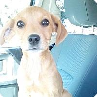 Adopt A Pet :: SAMMY - Beaumont, TX