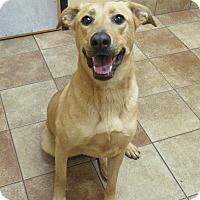 Adopt A Pet :: Dani *Petsmart GB* - Appleton, WI