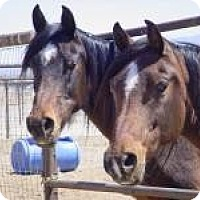 Adopt A Pet :: Dragonfly & Wings of Fire - Lucerne Valley, CA