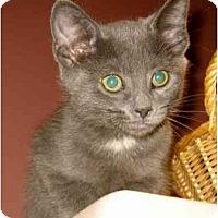 Adopt A Pet :: Kaboodle - New York, NY