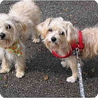Adopt A Pet :: Byron - West Palm Beach, FL