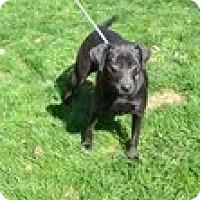 Adopt A Pet :: Snuggles - Lewisville, IN