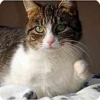 Adopt A Pet :: Abbie - Hamilton, ON