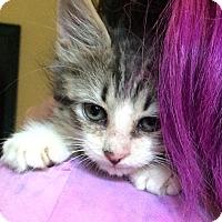Adopt A Pet :: Martin - Riverhead, NY