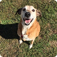 Adopt A Pet :: Polly - Burlington, NJ