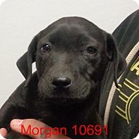 Adopt A Pet :: Morgan - Greencastle, NC