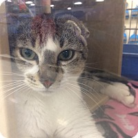 Adopt A Pet :: Tom - Byron Center, MI