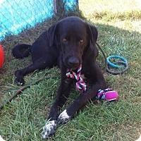 Adopt A Pet :: Yaatz - ADOPTED! - Zanesville, OH