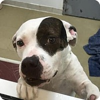 Adopt A Pet :: Mona - Miami, FL