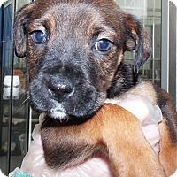 Adopt A Pet :: Artemis - Grants Pass, OR