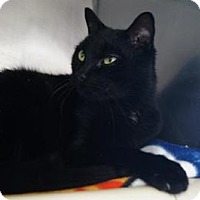 Adopt A Pet :: Boo - New Milford, CT