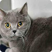 Adopt A Pet :: SWANSEA - West Palm Beach, FL