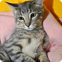 Adopt A Pet :: Frost - Neenah, WI