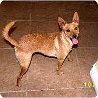 Adopt A Pet :: Bellisimo - Scottsdale, AZ