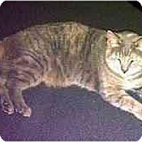 Adopt A Pet :: Tabitha - Alexandria, VA