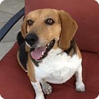 Adopt A Pet :: Ralphy - Phoenix, AZ