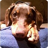 Adopt A Pet :: Peanut--adopted!! - New Richmond, OH