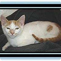 Adopt A Pet :: Pumpkin - Easley, SC