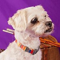 Adopt A Pet :: Rascal - Elizabethtown, PA
