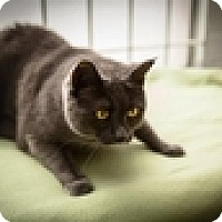 Adopt A Pet :: Dusty Rose - Vancouver, BC