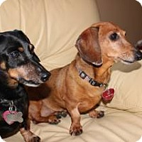 Adopt A Pet :: Sisi and Napolean - Forest Ranch, CA