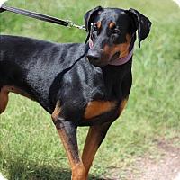 Adopt A Pet :: Maria - McAllen, TX
