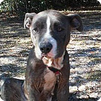 Adopt A Pet :: Hope - Jacksonville, FL