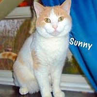 Adopt A Pet :: Sunny - York, PA
