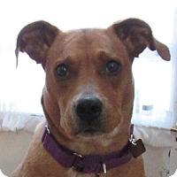 Adopt A Pet :: MARILOU - Albany, NY