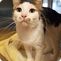Adopt A Pet :: Sammy - Chambersburg, PA
