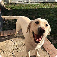 Adopt A Pet :: Angel Eyes - Ardsley, NY