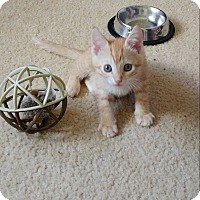 Adopt A Pet :: Ginger - Hollywood, FL