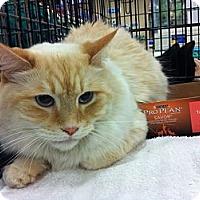 Adopt A Pet :: Bob Barker - Pittstown, NJ