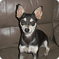 Adopt A Pet :: NEYA - Mission Viejo, CA