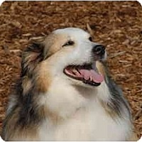Adopt A Pet :: Missy - Ft. Myers, FL