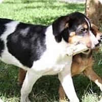 Adopt A Pet :: Jimmy - Staunton, VA