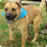 Adopt A Pet :: BARNEY - Leland, MS