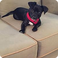 Adopt A Pet :: Nate - Marlton, NJ