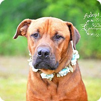 Adopt A Pet :: Rolla - Fort Valley, GA