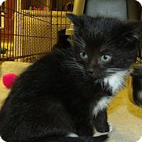 Adopt A Pet :: HEART - Acme, PA