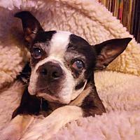 Adopt A Pet :: Margie - San Francisco, CA