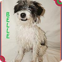Adopt A Pet :: Belle - Converse, TX