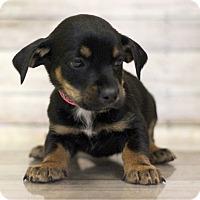 Adopt A Pet :: Kakuna - Waldorf, MD
