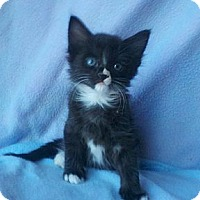 Adopt A Pet :: Brocko - Phoenix, AZ