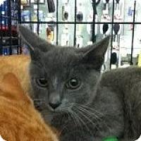 Adopt A Pet :: Larry - Riverside, RI
