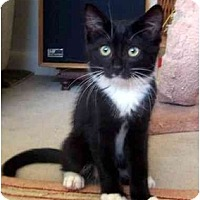 Adopt A Pet :: Peabody - Alexandria, VA