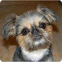 Adopt A Pet :: CHICA in Plainsfield, IL. - Sun Prairie, WI