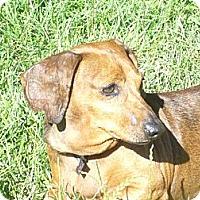 Adopt A Pet :: Bono - San Jose, CA