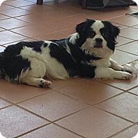 Adopt A Pet :: Aj - Hazard, KY