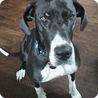 Adopt A Pet :: Daisy - Springfield, IL